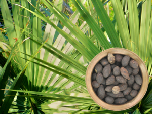 Saw palmetto and fruit